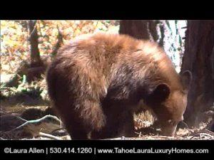 How to avoid a Tahoe Home Bear Break in