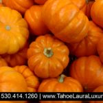 The Great Truckee Pumpkin Race – Oct 27 2017
