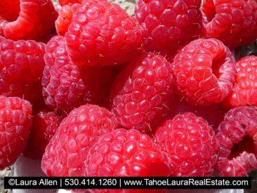 Tahoe City Farmers Market Fresh Produce